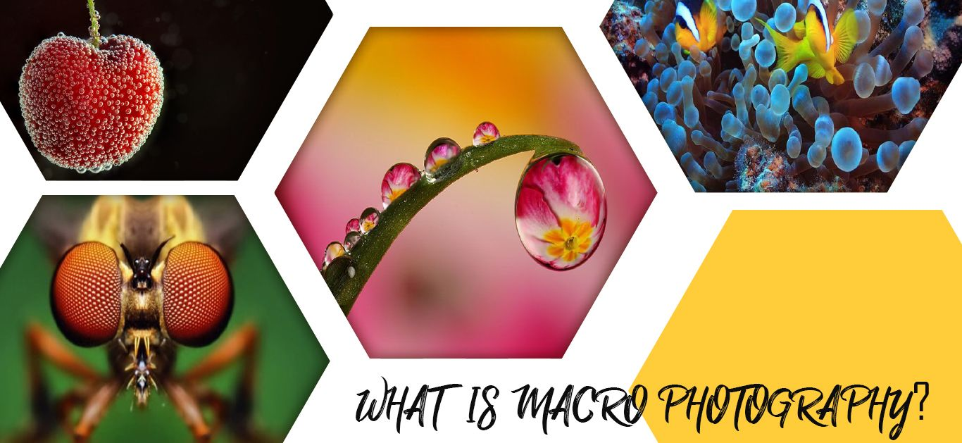 What is Macro Photography? | Detailed Guide 2020
